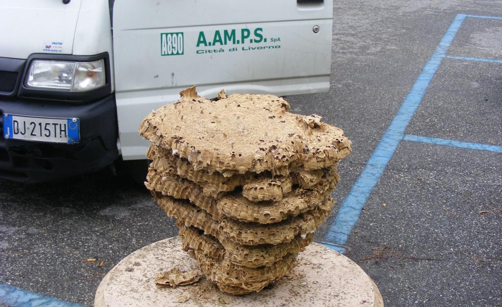 la tv non va? colpa di un nido di calabroni - quilivorno archivio