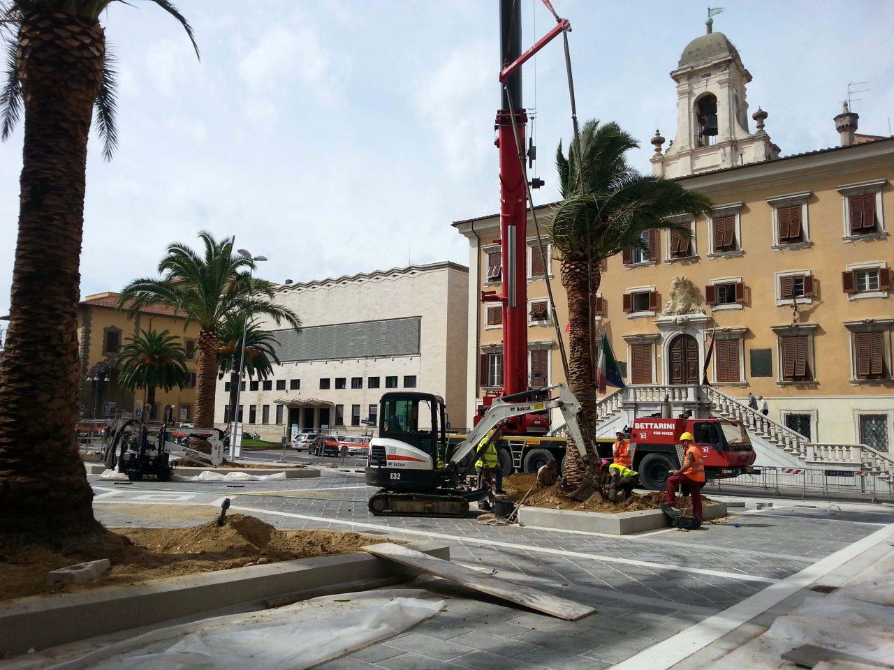 Arrivano le nuove palme in piazza del Municipio ...